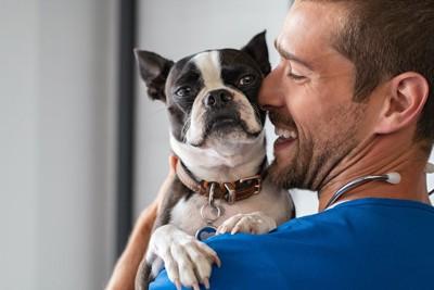笑顔の獣医師に抱かれているボストンテリア