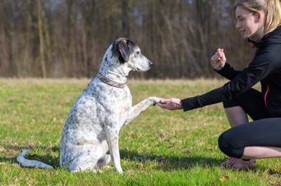 座ってオテをする犬と女性