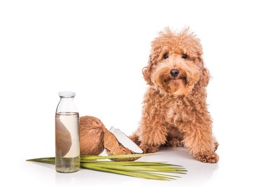 犬とココナッツオイル
