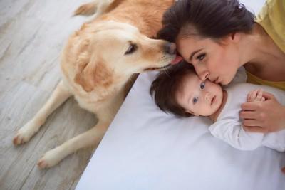 ベッドで寝ている子供と母親を舐める犬
