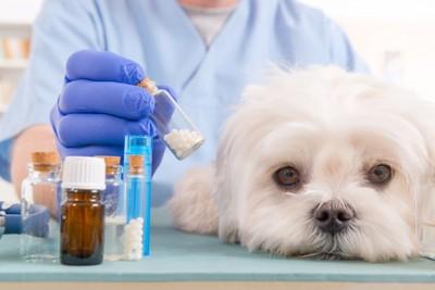 治療薬と白い犬