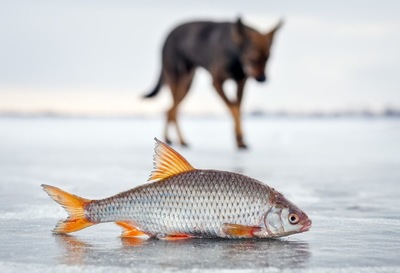 魚の遠景に犬