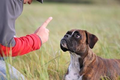 指を立てる人と見つめる犬