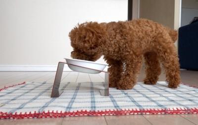 ナチュロルを食べる愛犬:横から