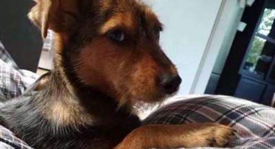 ベッドの上に茶色の犬