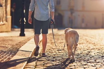 朝日を浴びながらお散歩する犬