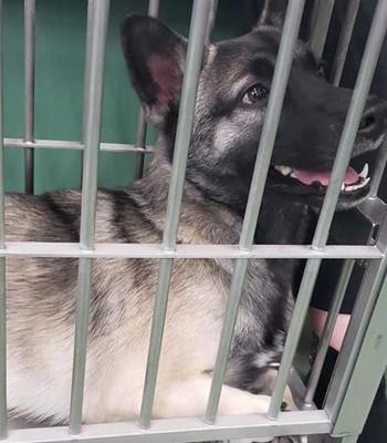 収容されている迷い犬