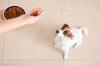 ドッグフードを手に持って犬にあげる人