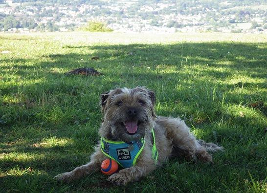芝生で笑っている犬