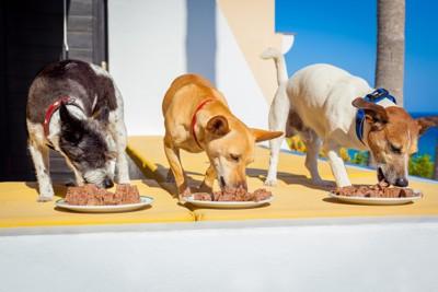 餌を食べる3匹の犬
