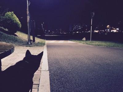 夜のお散歩、左端に黒い犬
