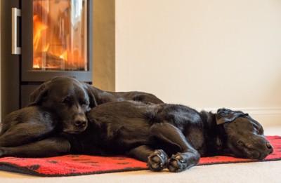 ストーブの前で眠る犬たち