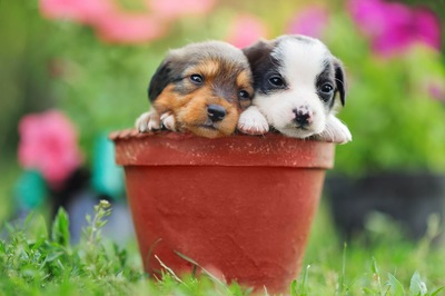 植木鉢に入った子犬2匹
