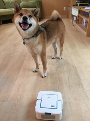ブラーバと笑顔の柴犬