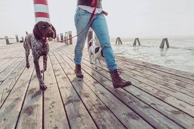 散歩する2匹の犬