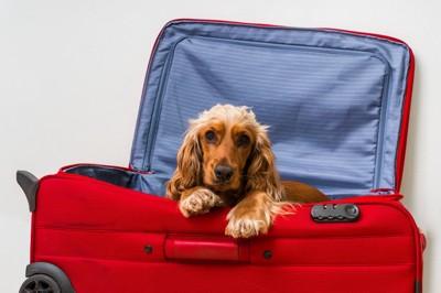 キャリーケースに入った犬