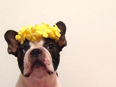 犬と花の写真