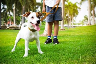 散歩に出て嬉しそうな犬