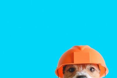 工事のヘルメットをかぶった犬