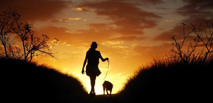 夕日に向かう犬と人