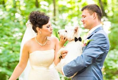 結婚式に参加する犬