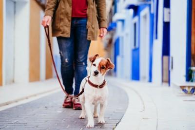 飼い主と街を散歩している犬