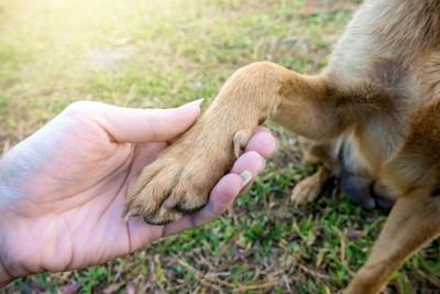 握手する犬と人