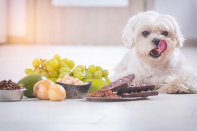 寝ている犬とその前に置いてあるたくさんの食べ物