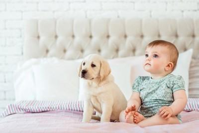 ベッドに座る赤ちゃんと子犬