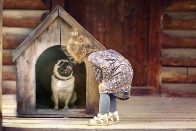 犬小屋と犬
