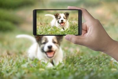 写真を取られる子犬