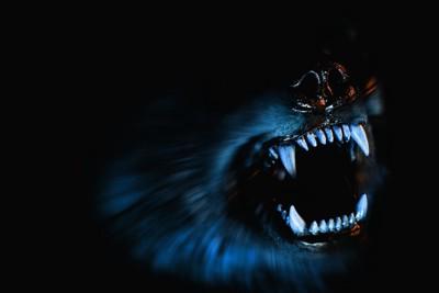 暗闇の中で牙をむいた犬の口元