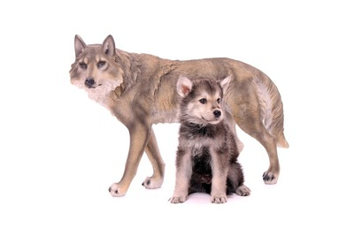 オオカミ犬と子犬