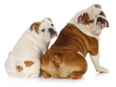 お尻をこちらに向けて座る2匹の犬