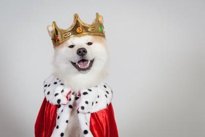 王様の格好をした犬
