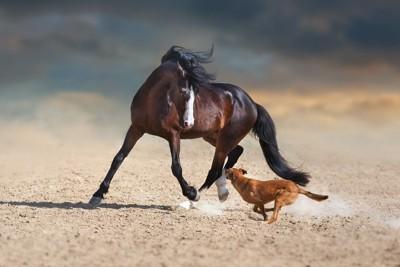 一緒に走る馬と犬