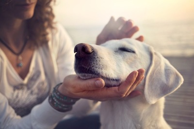 女性に顔を撫でられる犬