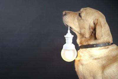 電球をくわえる犬の横顔