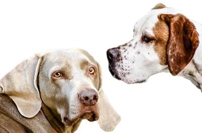 違う方向を向いている2匹の犬