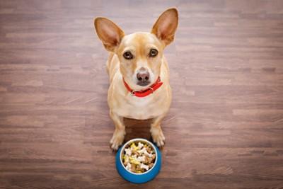 ご飯の前に座って指示を待つ犬