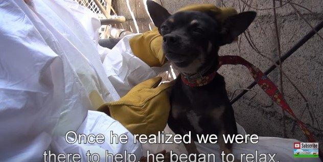 ひもをかけられた犬