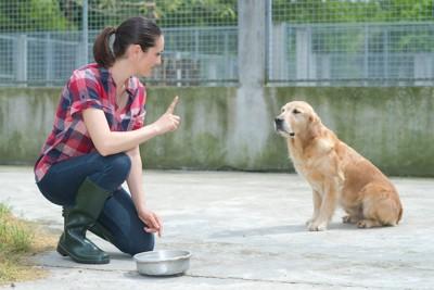 ご飯を待つよう指示されている犬