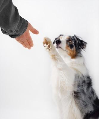 飼い主と手を上げる犬