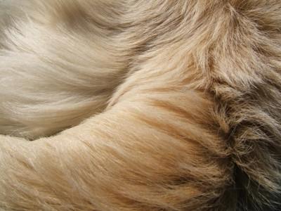 犬の毛並み