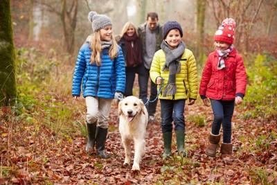落ち葉の中を散歩する犬