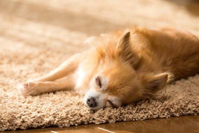 ラグマットの上で眠る犬