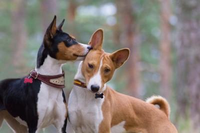 犬の耳に口元を当てる犬