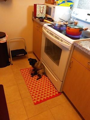 キッチンにいるウメ