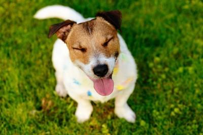 芝生の上に目を瞑って座る犬
