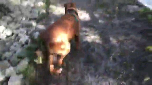 陸に上がる犬